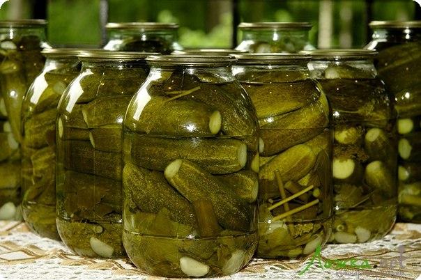 огурцы малосольные рецепт хрустящие быстрого приготовления с минералкой
